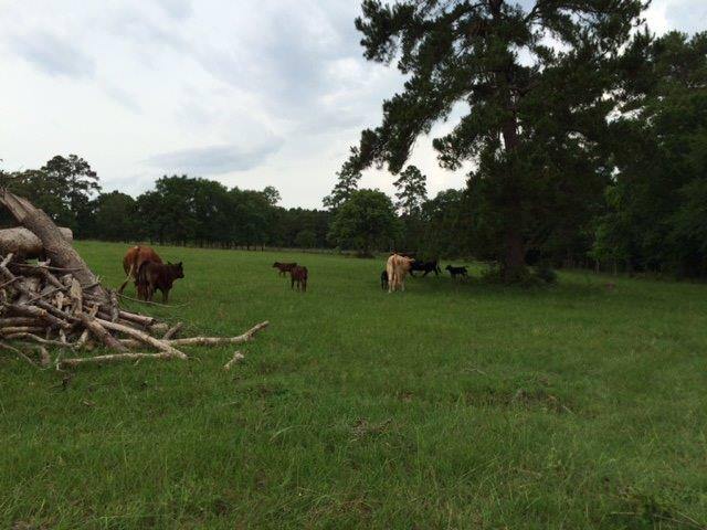 Pasture with mommas and babies