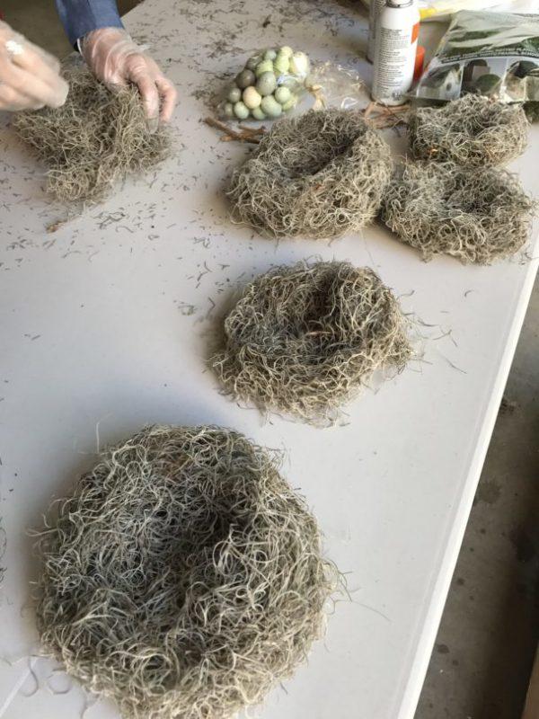 spanish moss nests