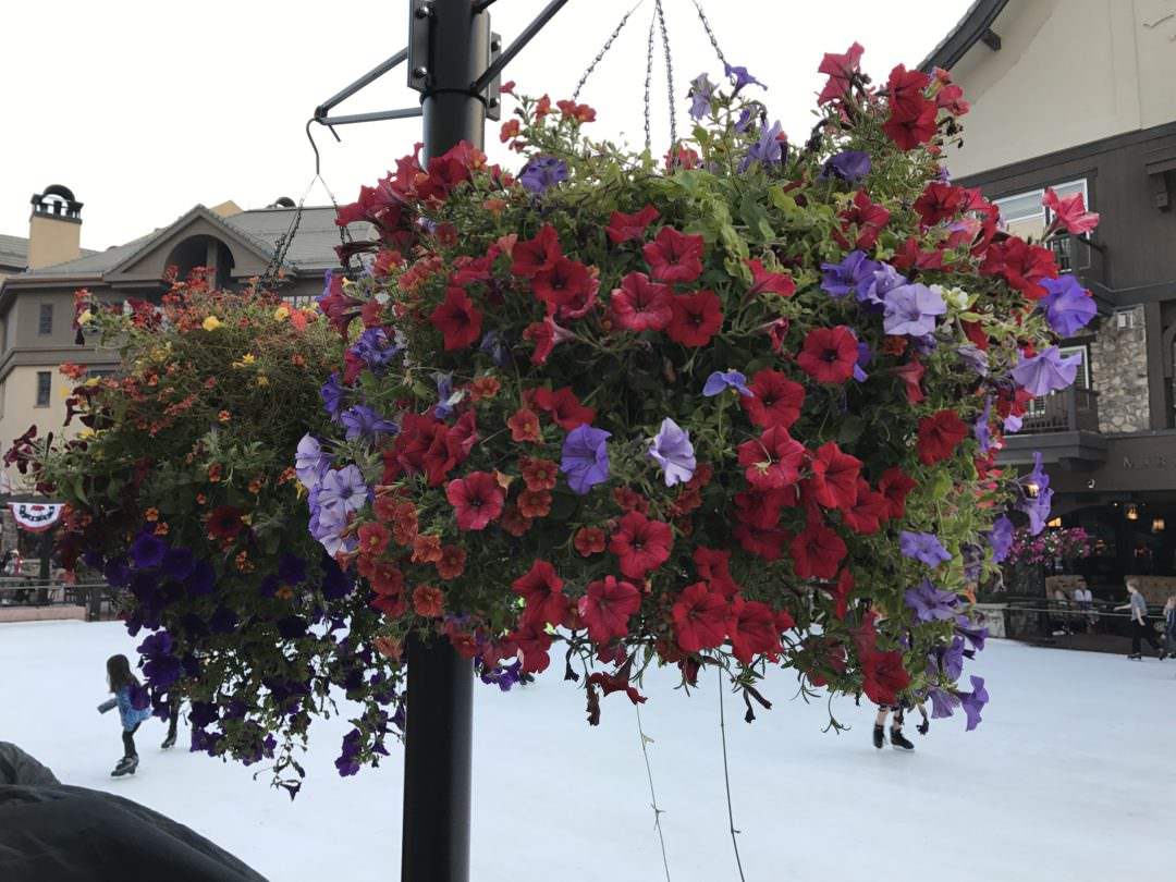 Hanging flower basket in Beaver Creek Colorado