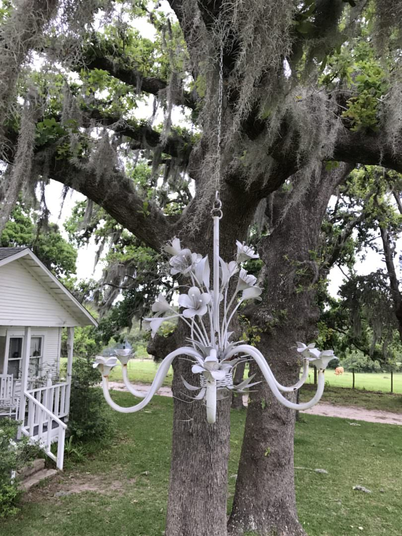 chandelier painted white and hung in tree in Navasota, TX