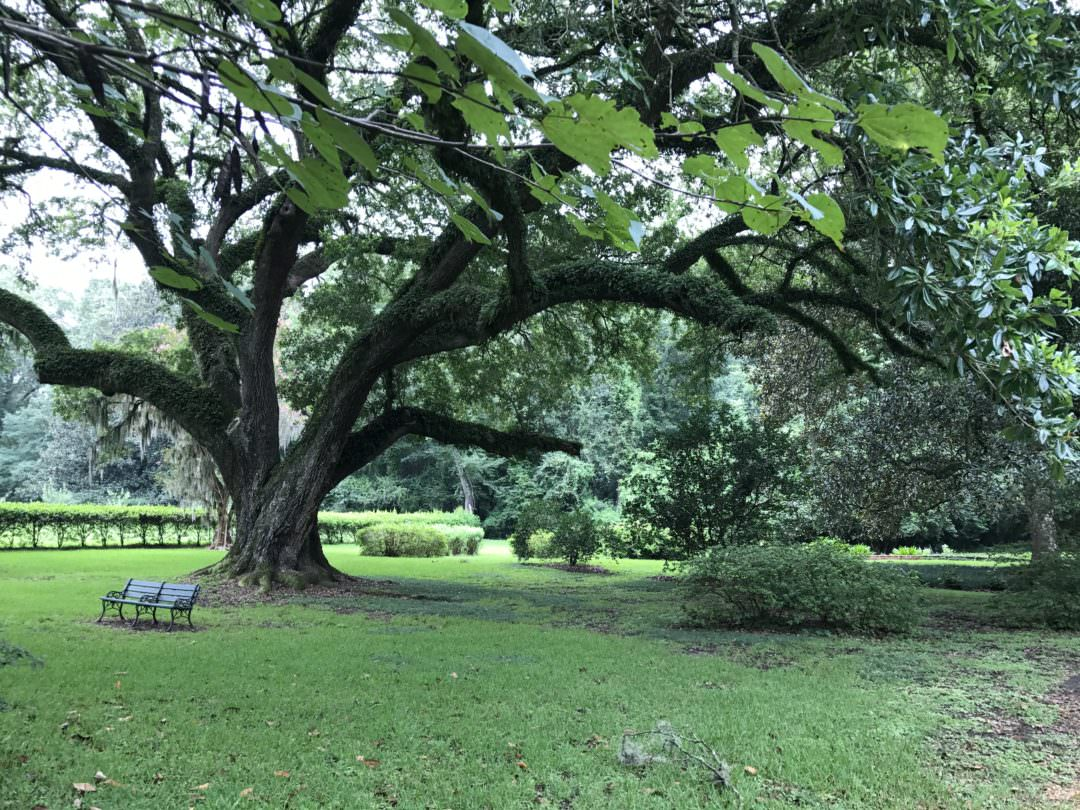 Tree with bench at Melrose Mansion in Natchez Mississippi